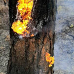 rng-takes-active-part-in-extinguishing-forest-fires-in-yakutia-07